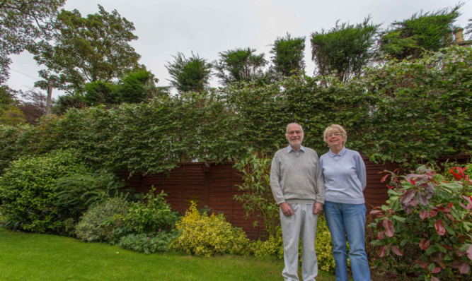 Denis and Maureen Parry claim their neighbours have removed sections of the leylandii hedge so it becomes a row of trees and escapes the powers of the High Hedge Act.