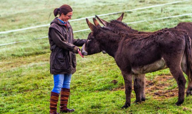 Lindsey Knox with donkeys Floppy and Ernie.