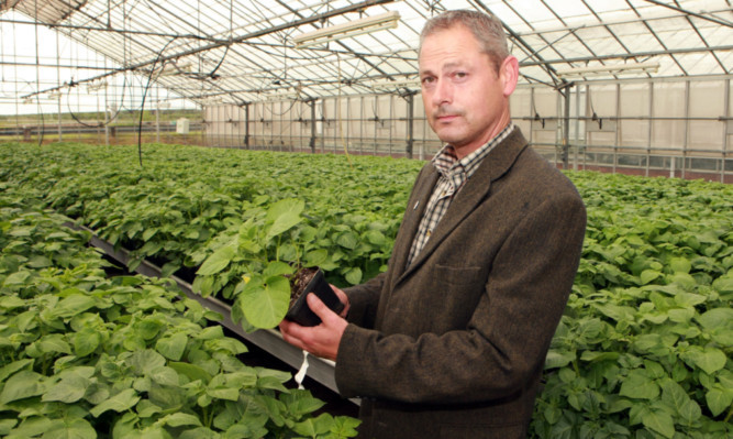 Potato breeder Drummond Todd inspects seedlings in one of the glasshouses at the James Hutton Institute in Invergowrie.