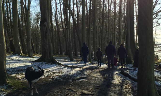Dog walkers in Backmuir Woods are being warned to be vigilant.