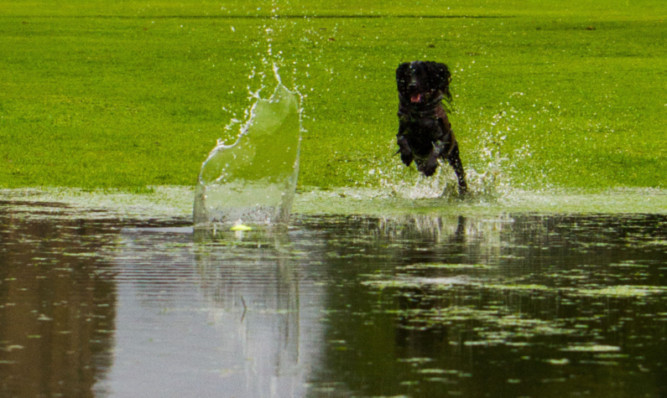 Recently flooded areas raise the risk of leptospirosis in dogs.