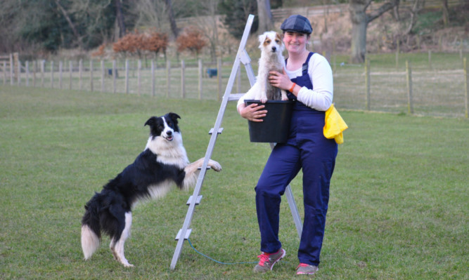 Hannah Paterson brushes up on her George Formby routine with dogs Pixel and Rumour.