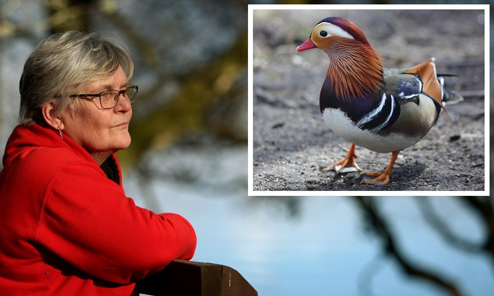 COURIER, DOUGIE NICOLSON, 28/03/16, NEWS. Pictured at Loch Of The Lowes today, Monday 28th March 2016, is Suzi Anderson, looking for her lost duck, Hamish McDuck. Story by Perth office.