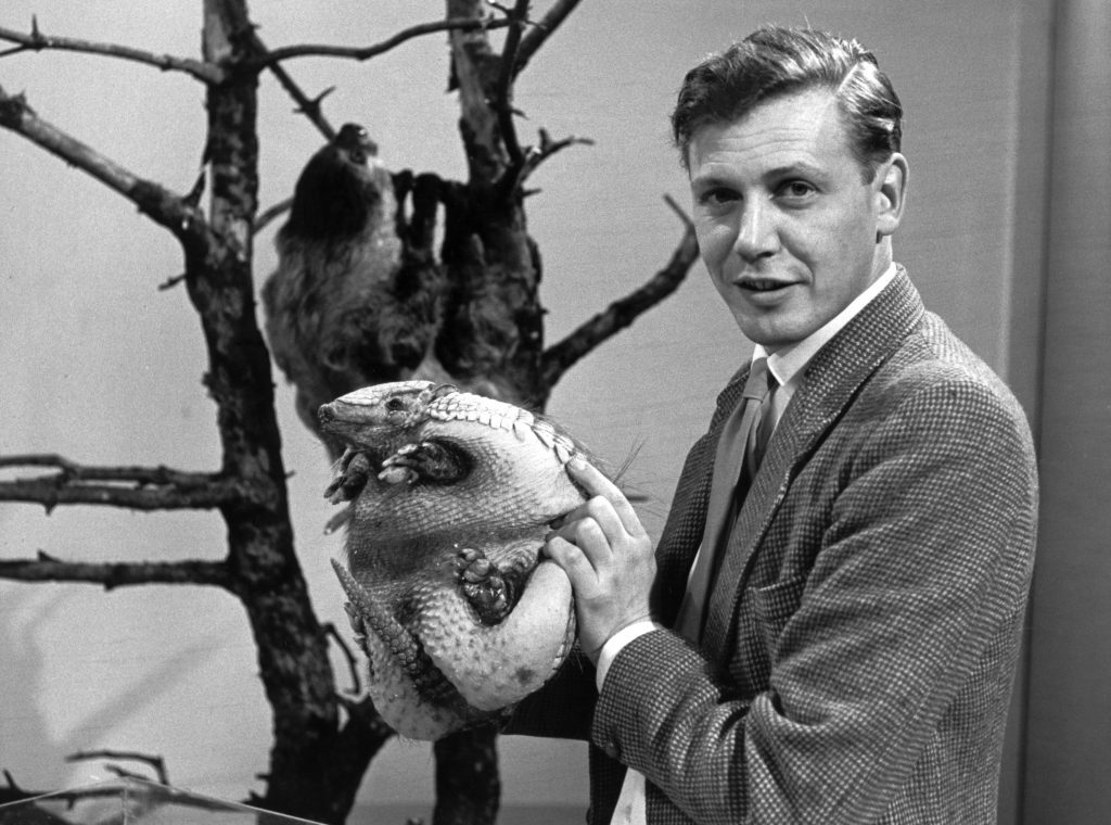 Sir David Attenborough with an armadillo from 'Attenborough's Animals' in 1963.