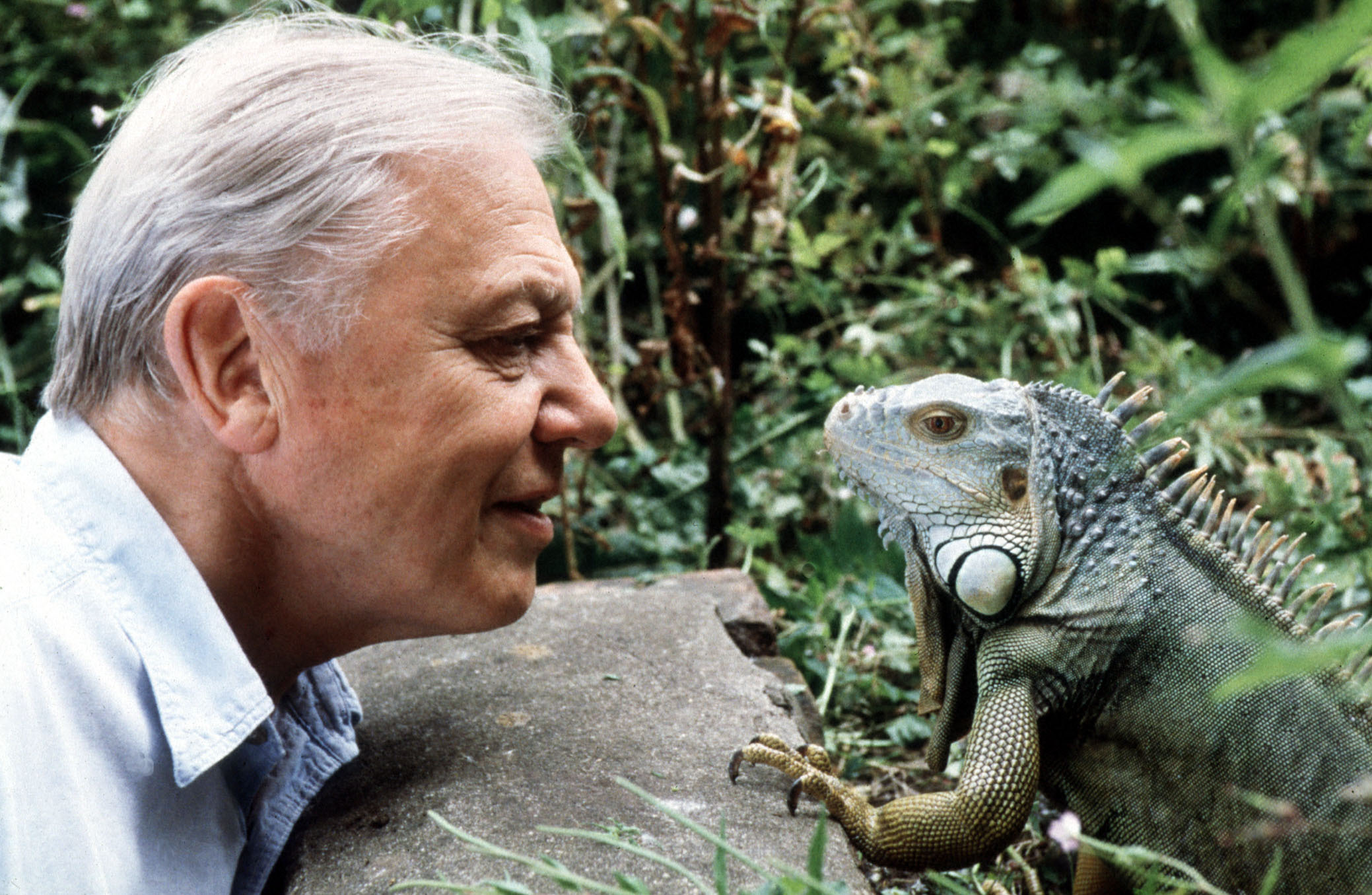 Attenborough at 90.