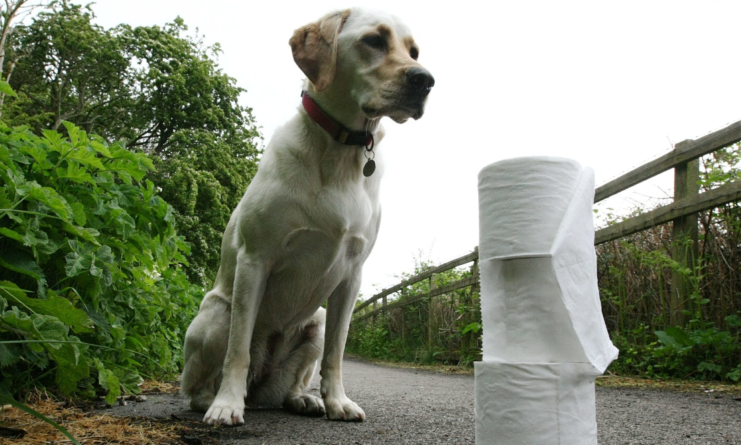 Dog owners are being asked to sign a pledge.