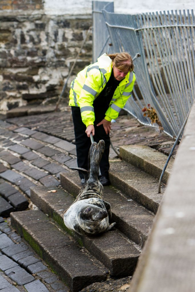 A rescue officer assesses the condition of the seal.