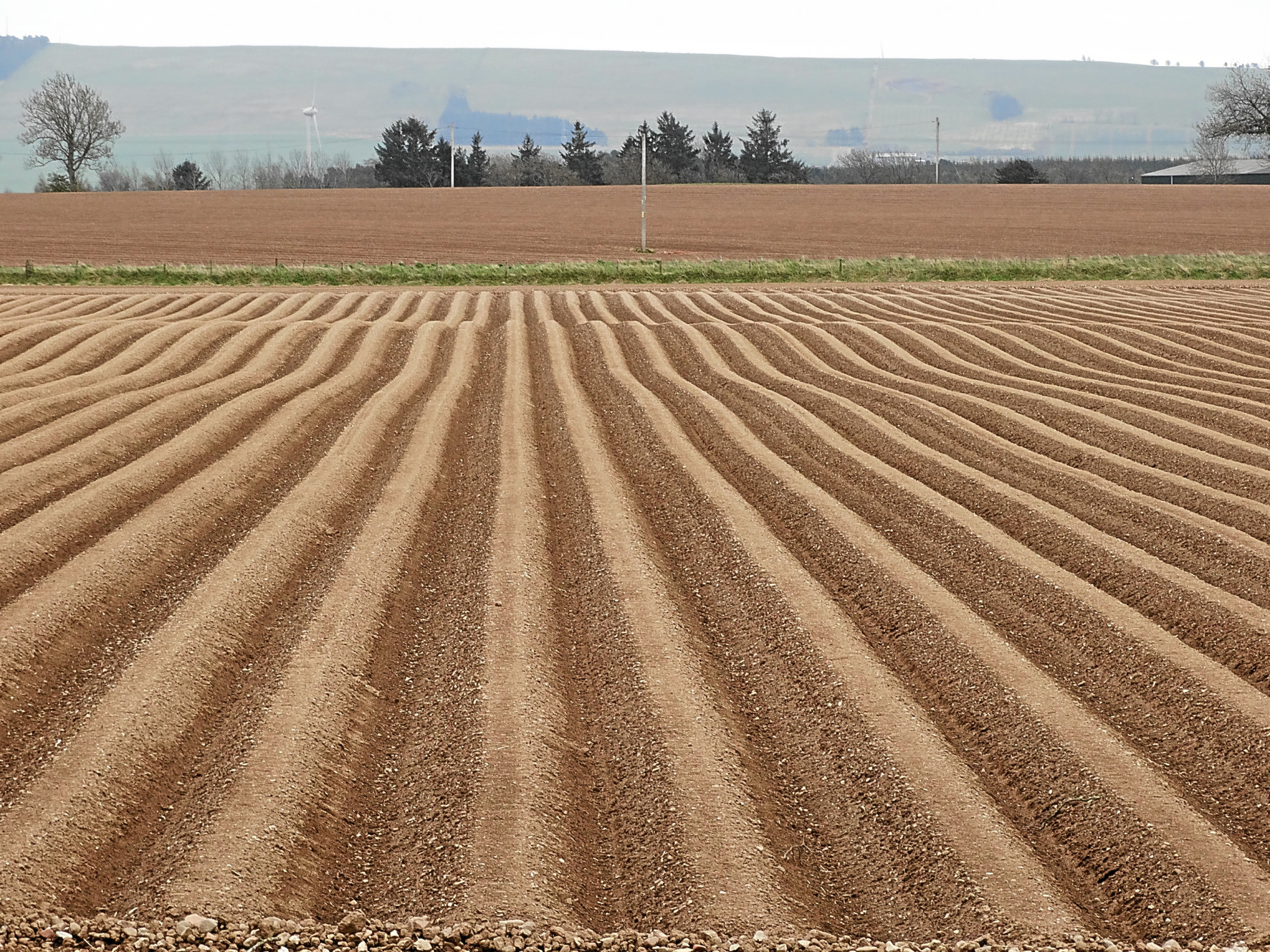 The arrow-straight drills of a tattie field, achieved with help from GPS.