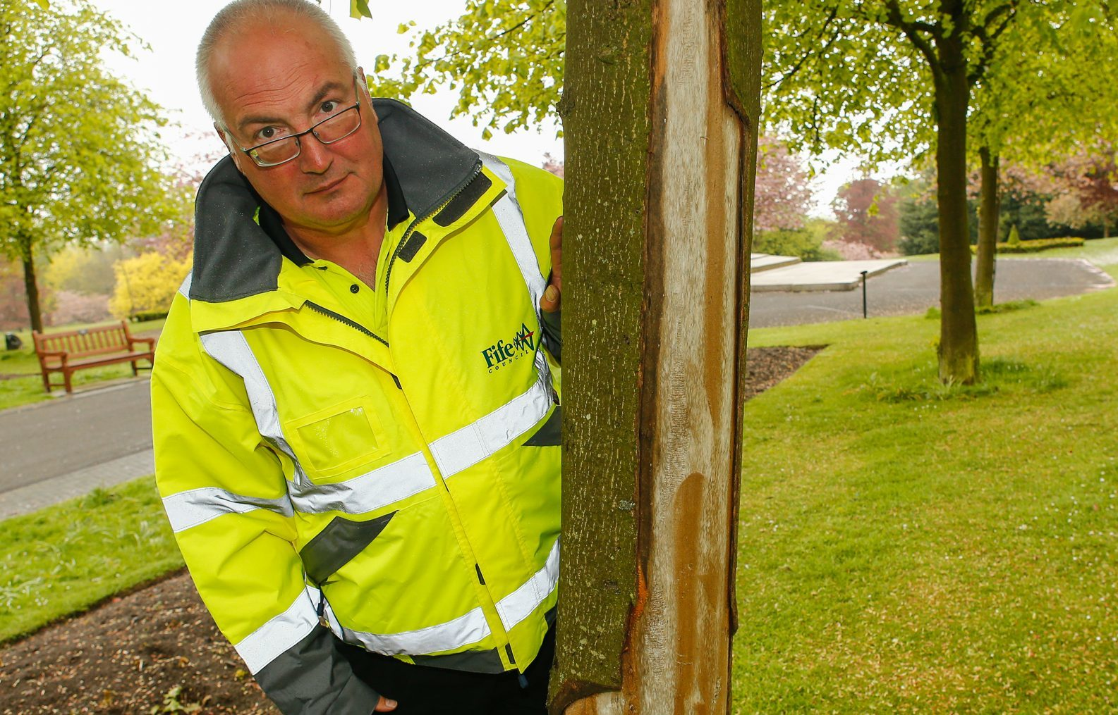 Nigel Stevens inspects the damage to the Lime trees in Pittencrieff Park
