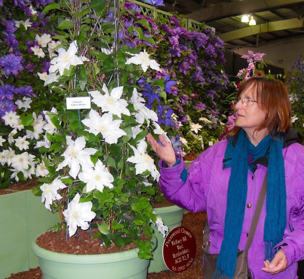 Beautiful clematis at Ingliston Flower Show