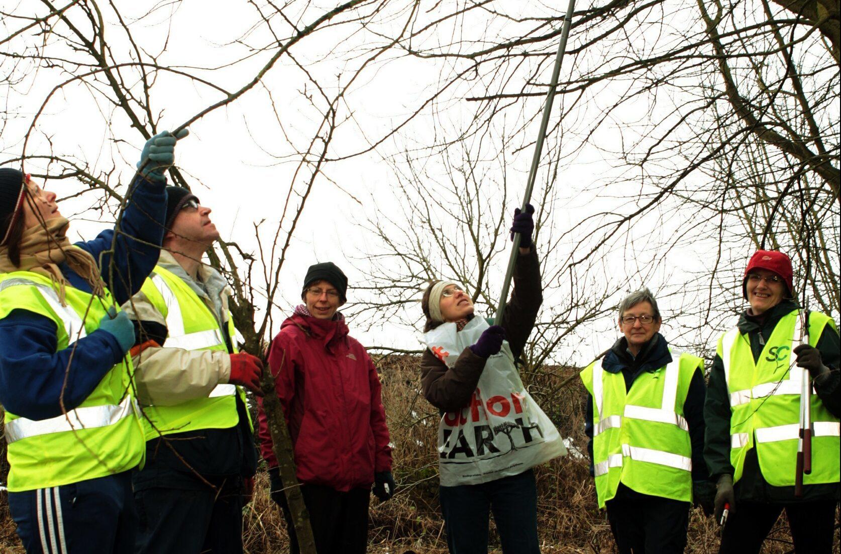 Sustainable Cupar members pruning fruit trees