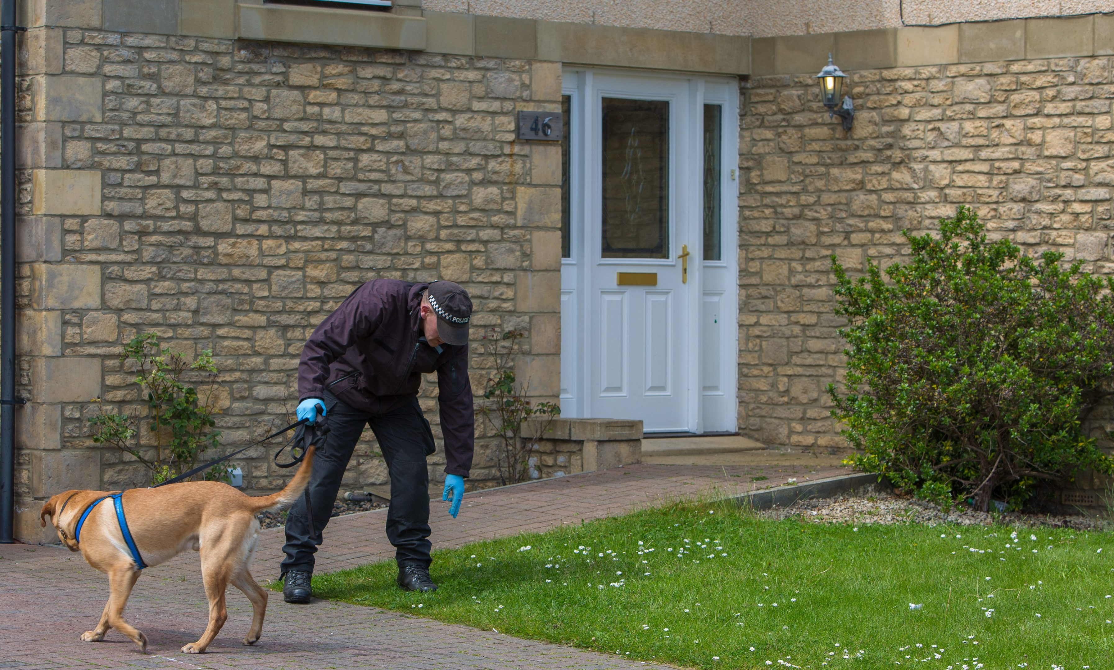 Bullet holes were visible in the front door of the property as the sniffer dog looks for clues in the garden.