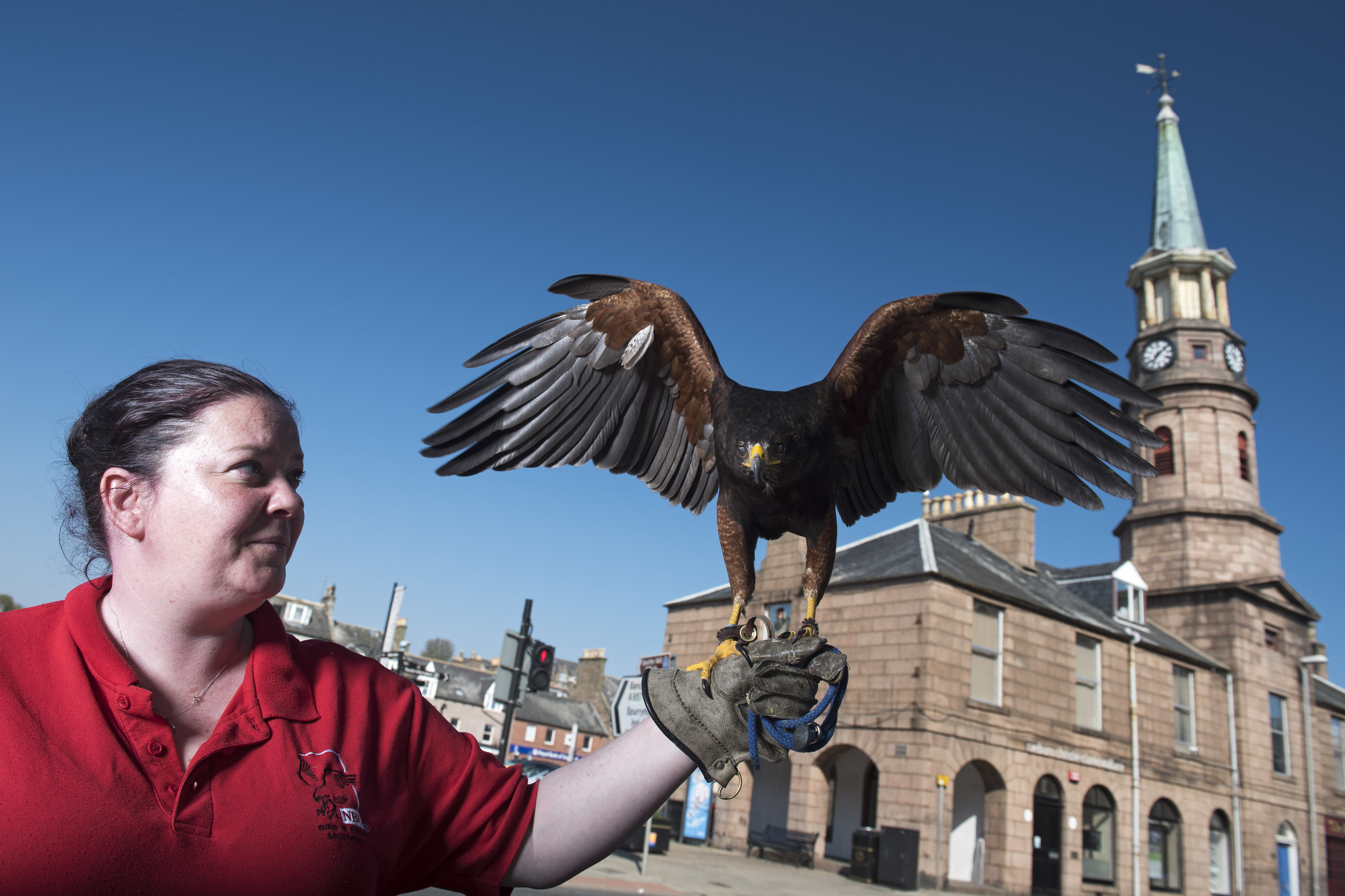 Pest controller Kirsty Imlay with Buell, a two-year-old Harris hawk, in Stonehaven.