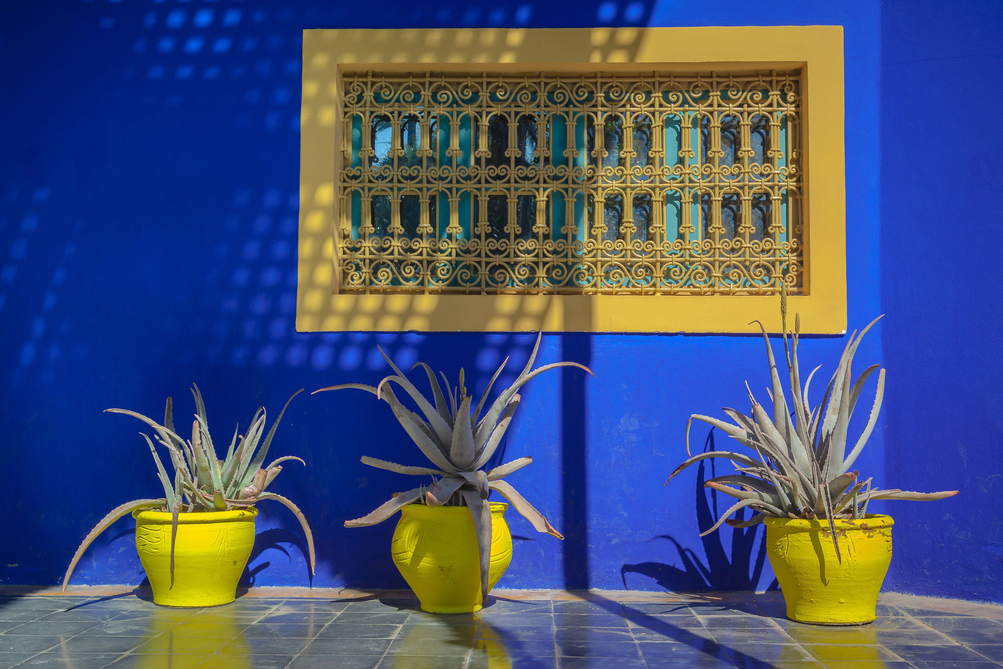 Colourful Scene From The Marjorelle Gardens In Marrakech.