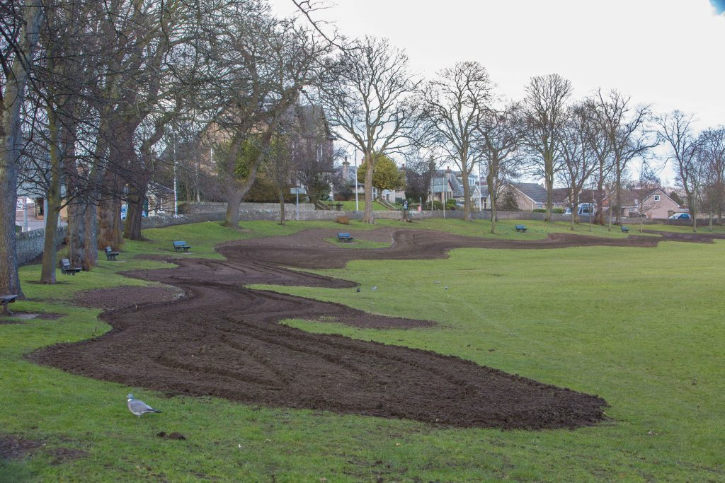 A section of Haugh Park in Cupar has been planted with wildflower seeds to help attract insects