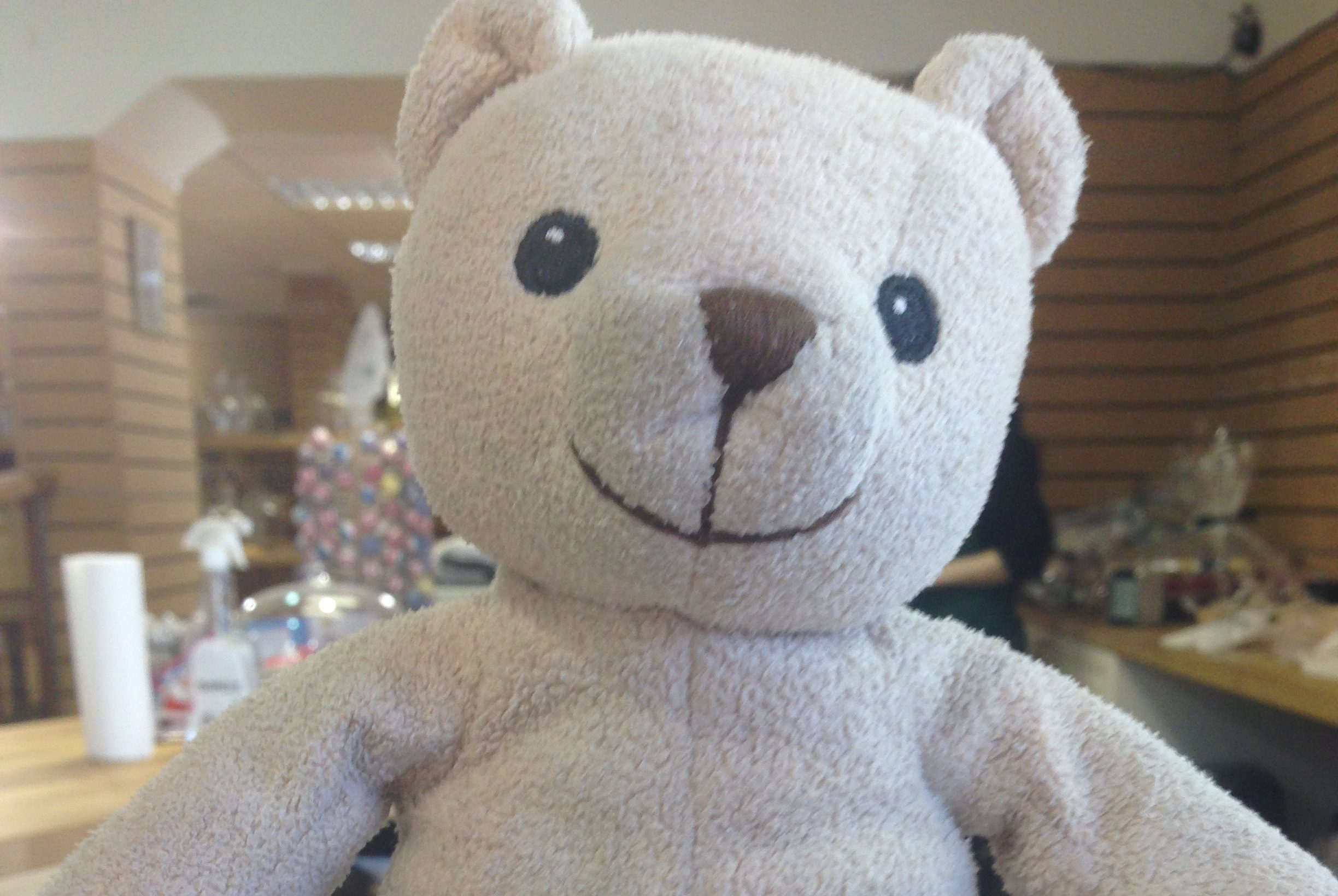 """Teddy enjoyed his """"extended holiday"""" in Pitlochry."""