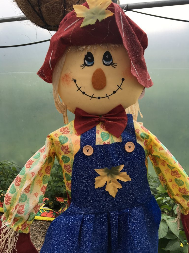 A friendly scarecrow in the poly tunnel