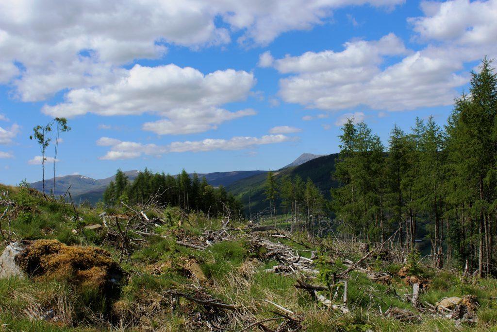 4. Lawers Range and Schiehallion from Bolfracks Wood - James Carron Take a Hike June 18
