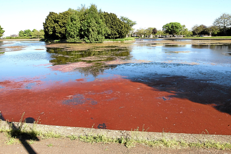 The red algae at Stobsmuir Ponds.