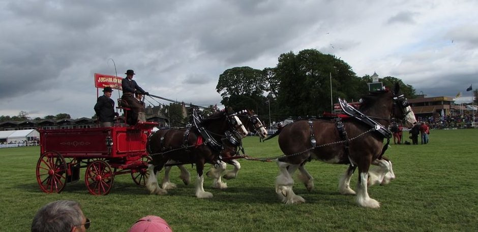 The Clydesdales in action at last year's show