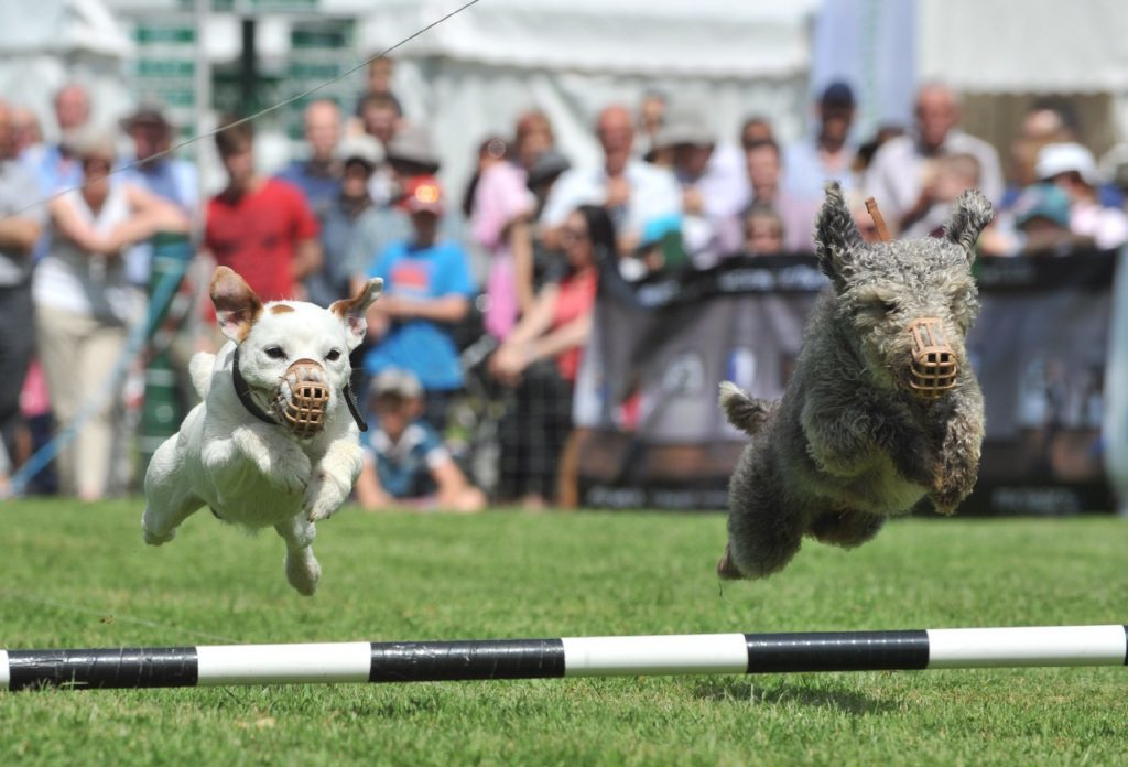 Terrier racing. www.RobMcDougall.com 07856 222 103 info@robmcdougall.com Copyright Rob McDougall 2015 No sales or syndication