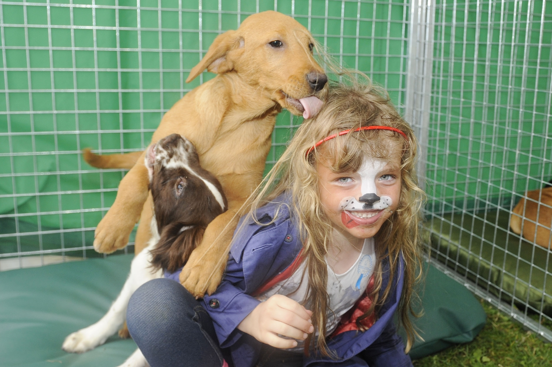 Amelia Marshall (5) from Edinburgh with some trainee gundogs.