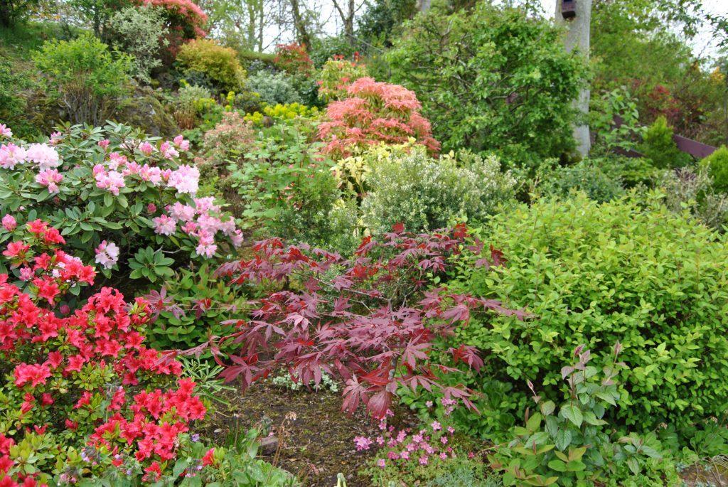 Linda Farrell's wonderful garden in Wormit, Fife.