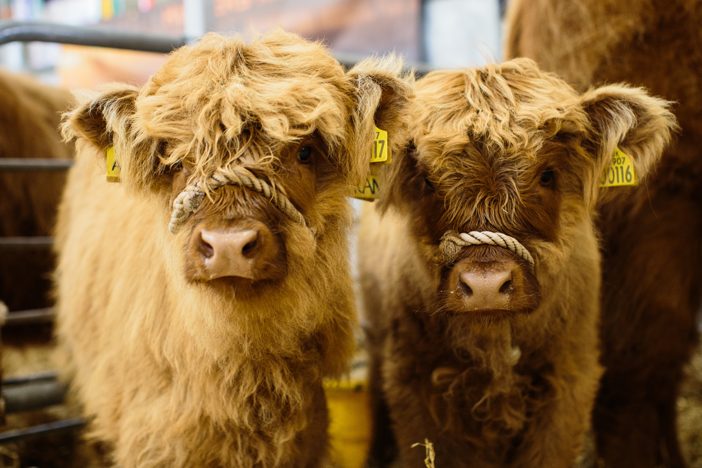 The deadline for beef support scheme applications is December 31