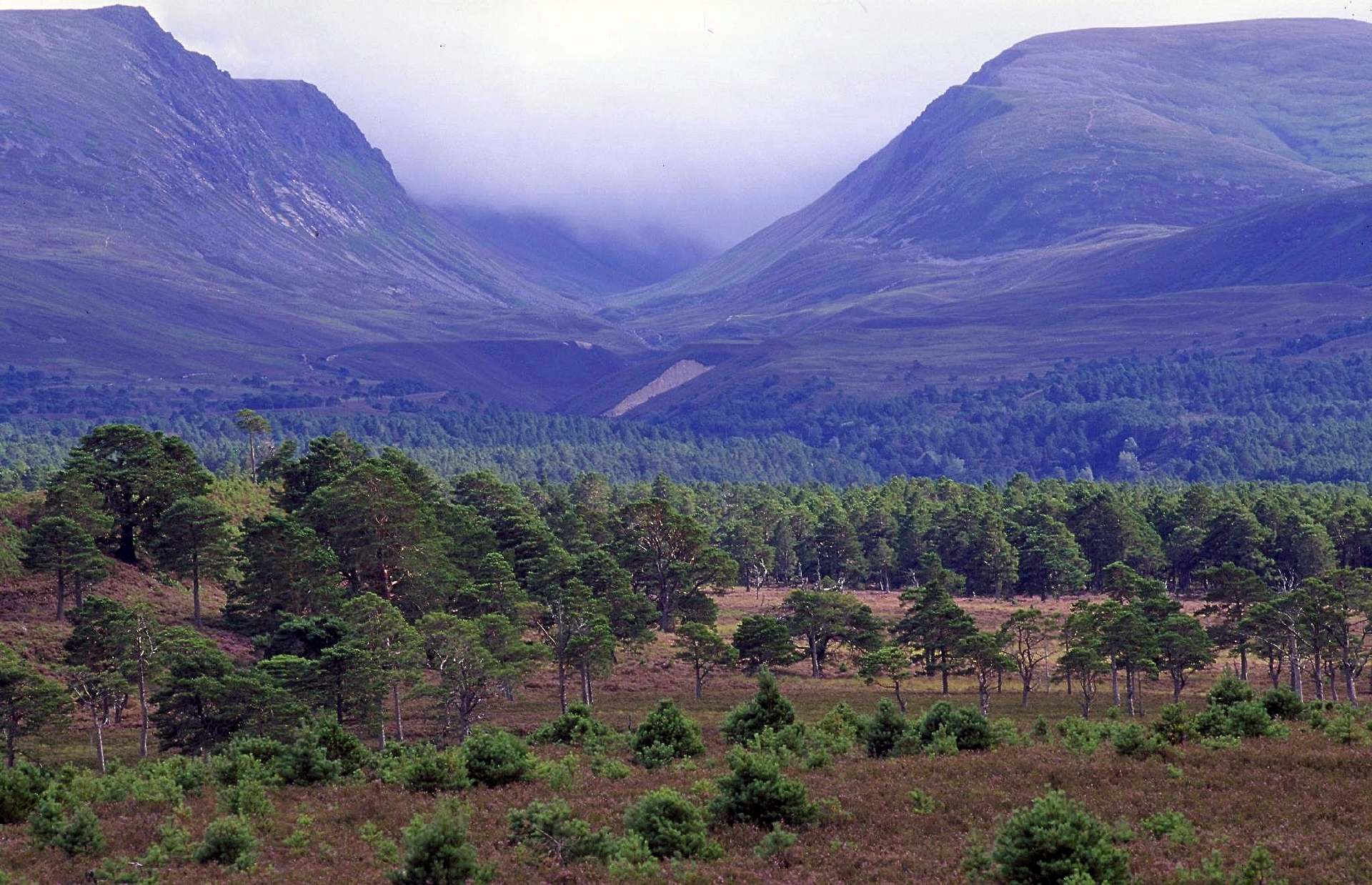 The Cairngorms.