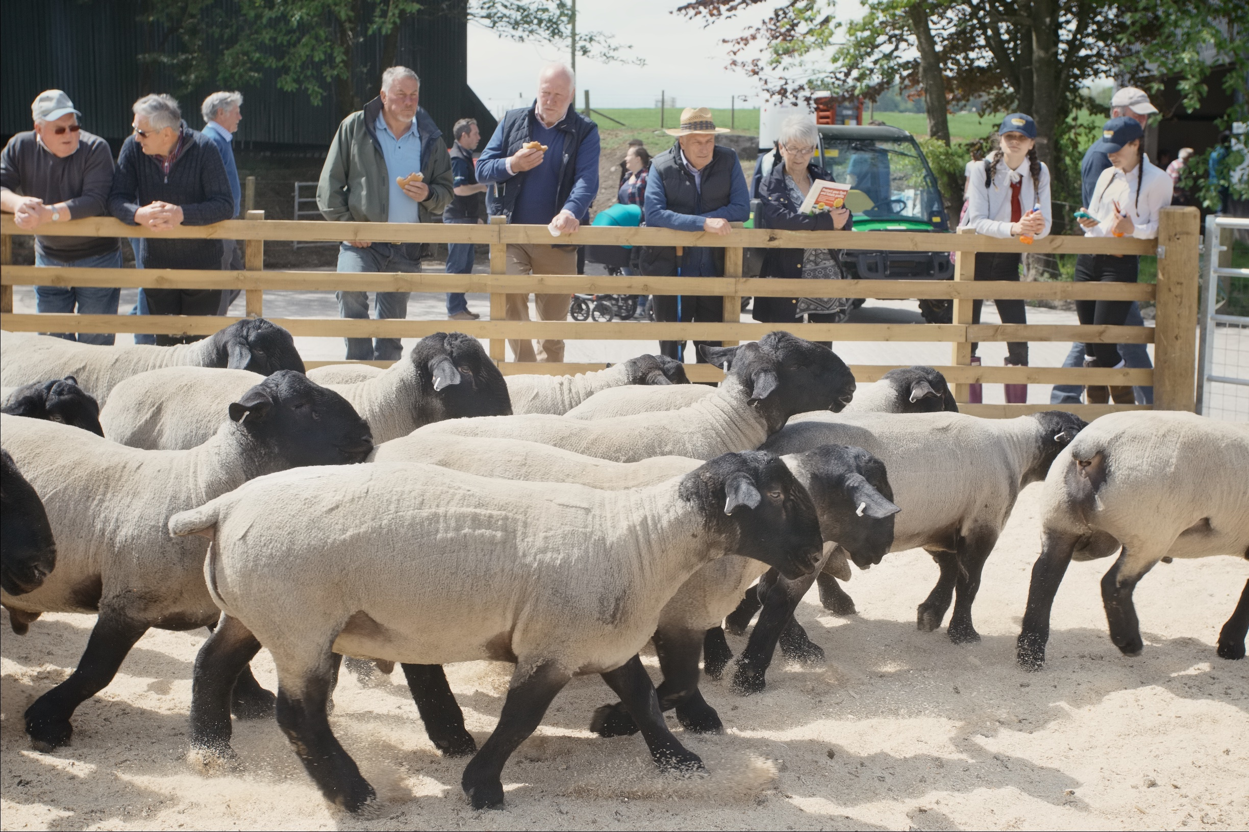 Consumers want high welfare animals that roam outdoors, Scotsheep was told