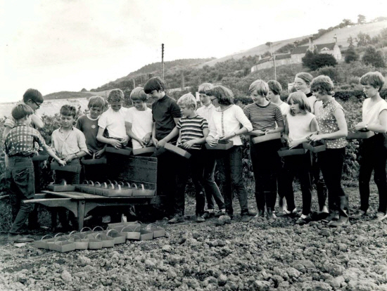 Collecting their punnets ready to start picking raspberries in August 1970.
