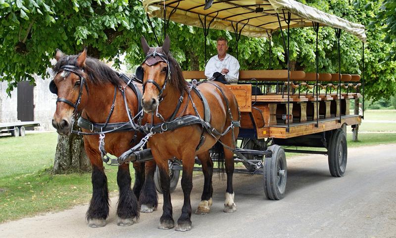 horse-drawn-carriage-tour