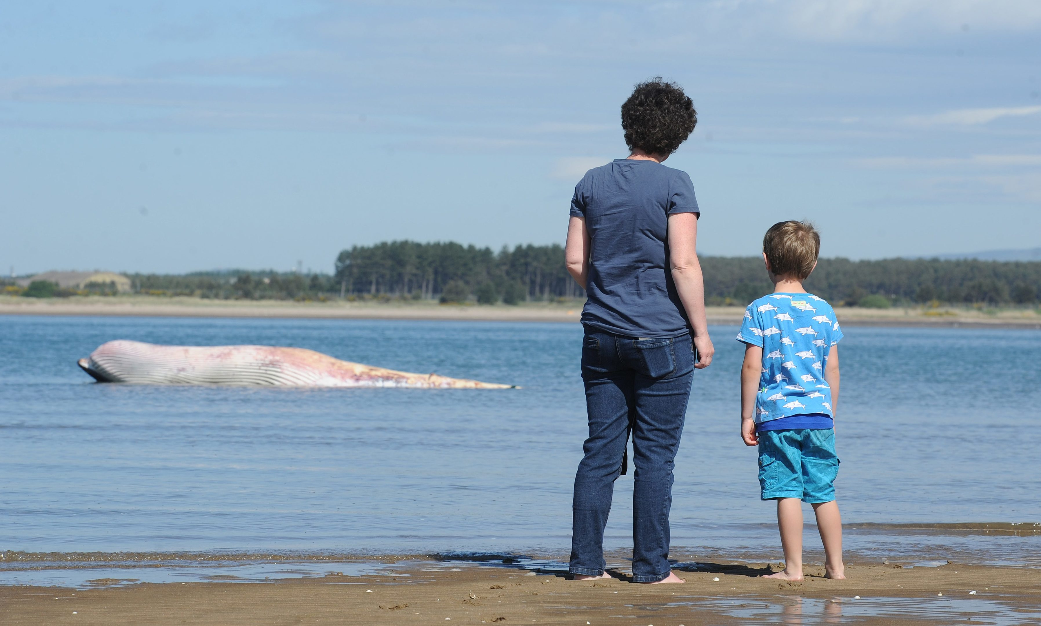 Susan and her son Francis look at the dead whale as the tide comes in.