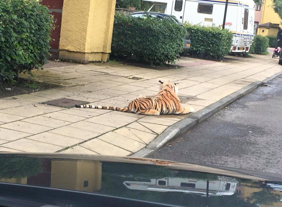 """The """"tiger"""" spotted on a street in Perth"""