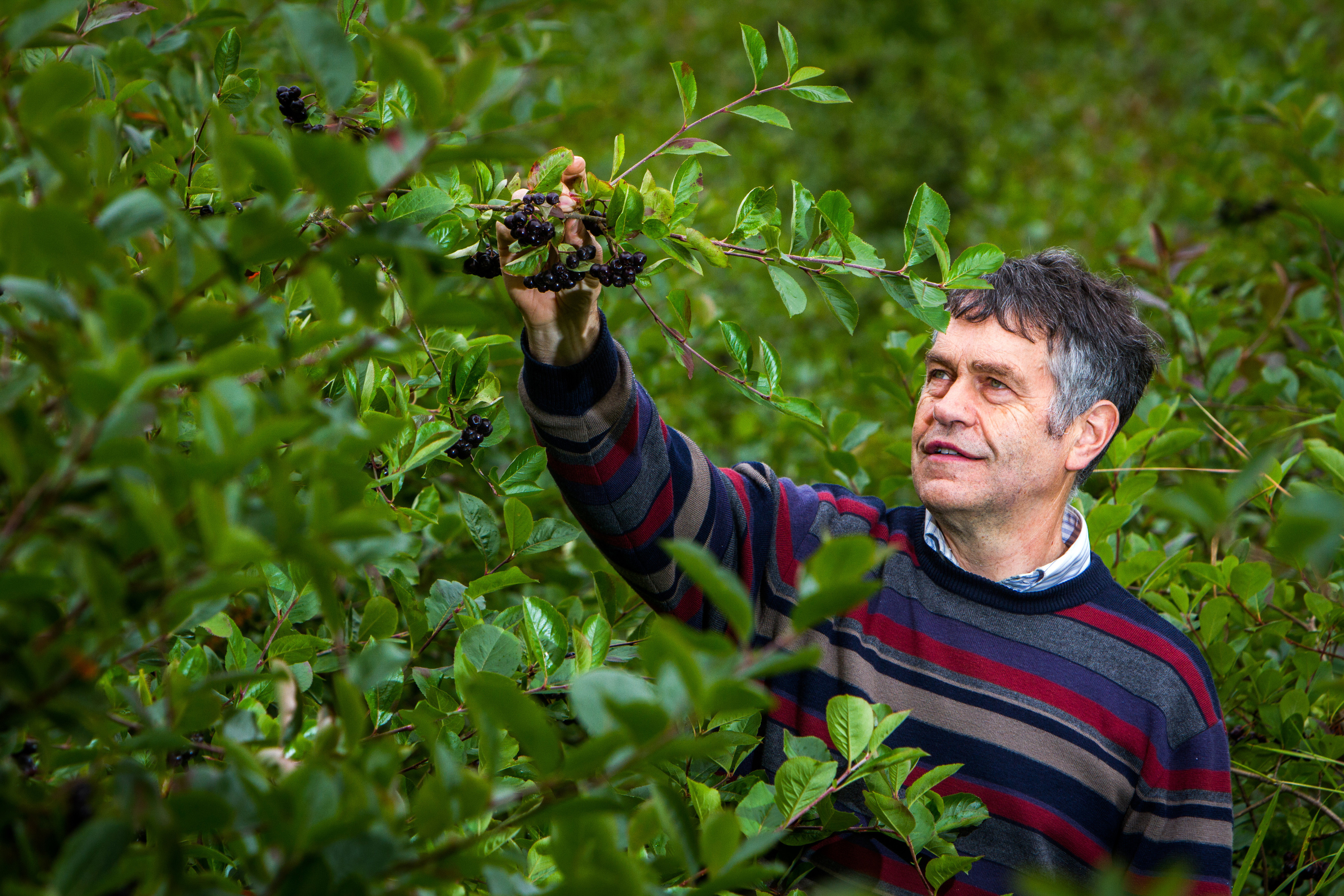 Scottish fruit farmers like Peter Thomson rely on overseas workers