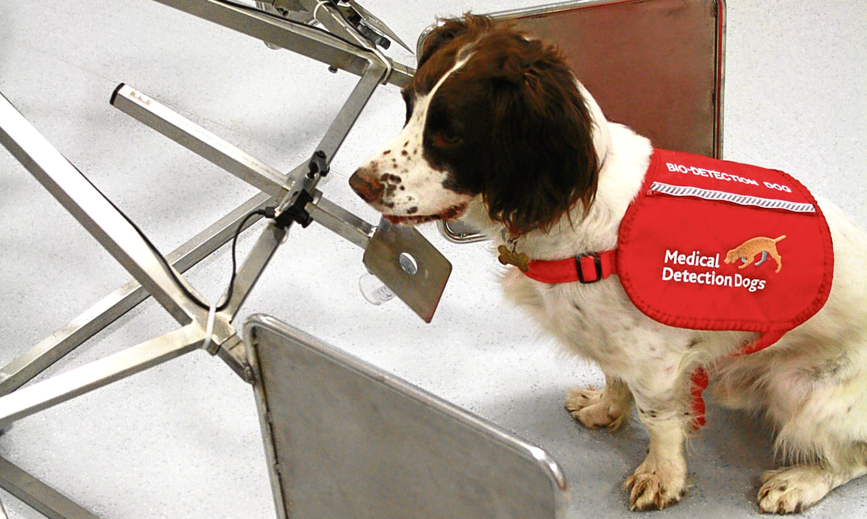 A medical detection spaniel dog in front of a carousel that cancer samples are placed into.