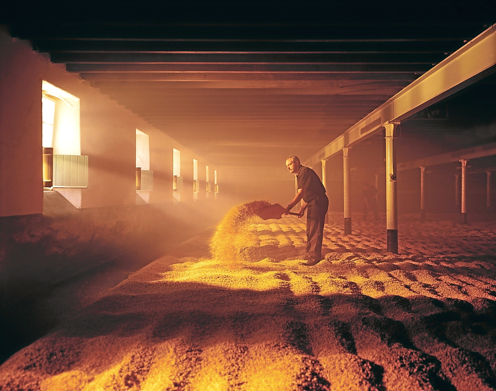 William Grant distiller The malt being turned before it is made into whisky at Balvenie  Distillery.
