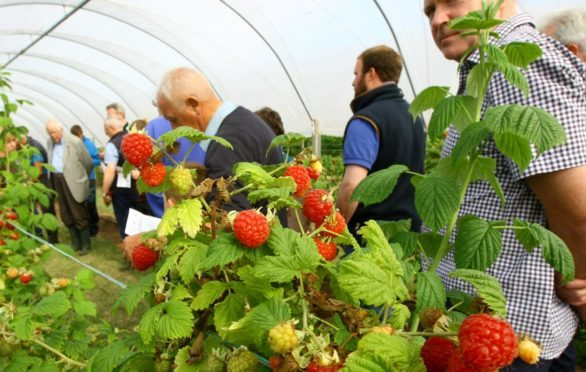 The soft fruit industry relies heavily on seasonal labour
