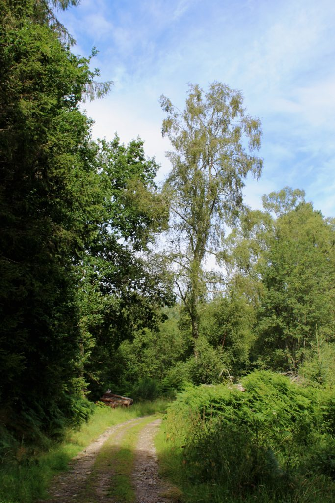 1 - Logierait Wood - James Carron, Take a Hike