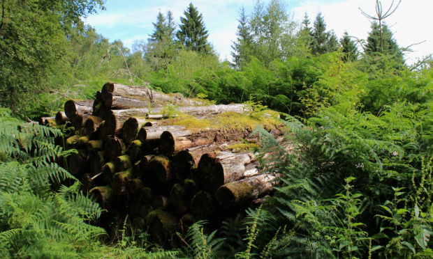 Money will also be spent to transport timber by sea