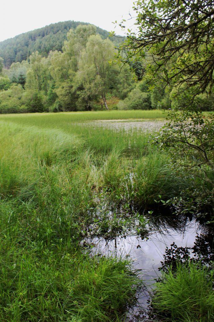 3 - The former curling pond - James Carron, Take a Hike
