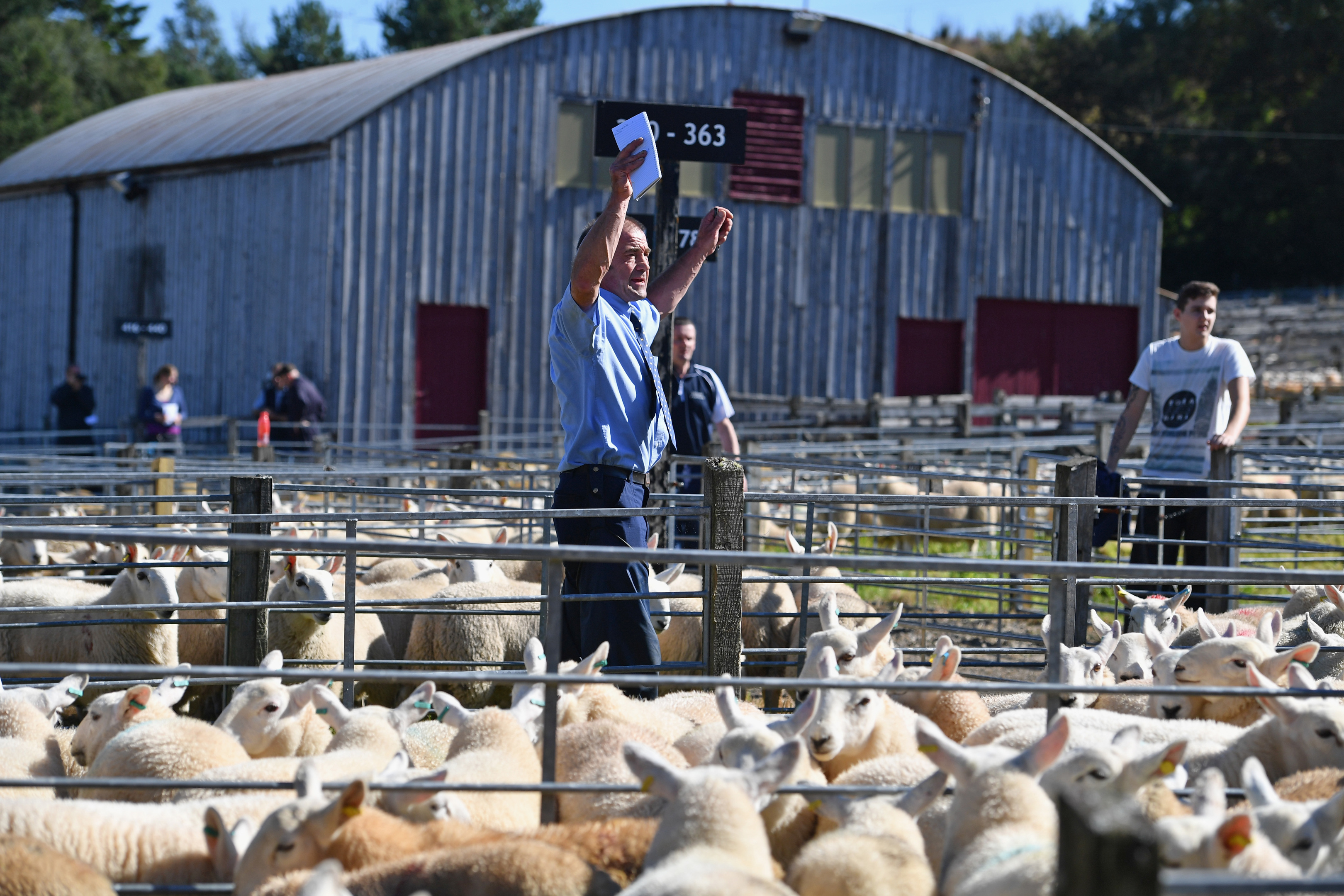 The sheepmeat industry is benefitting from the fall in sterling