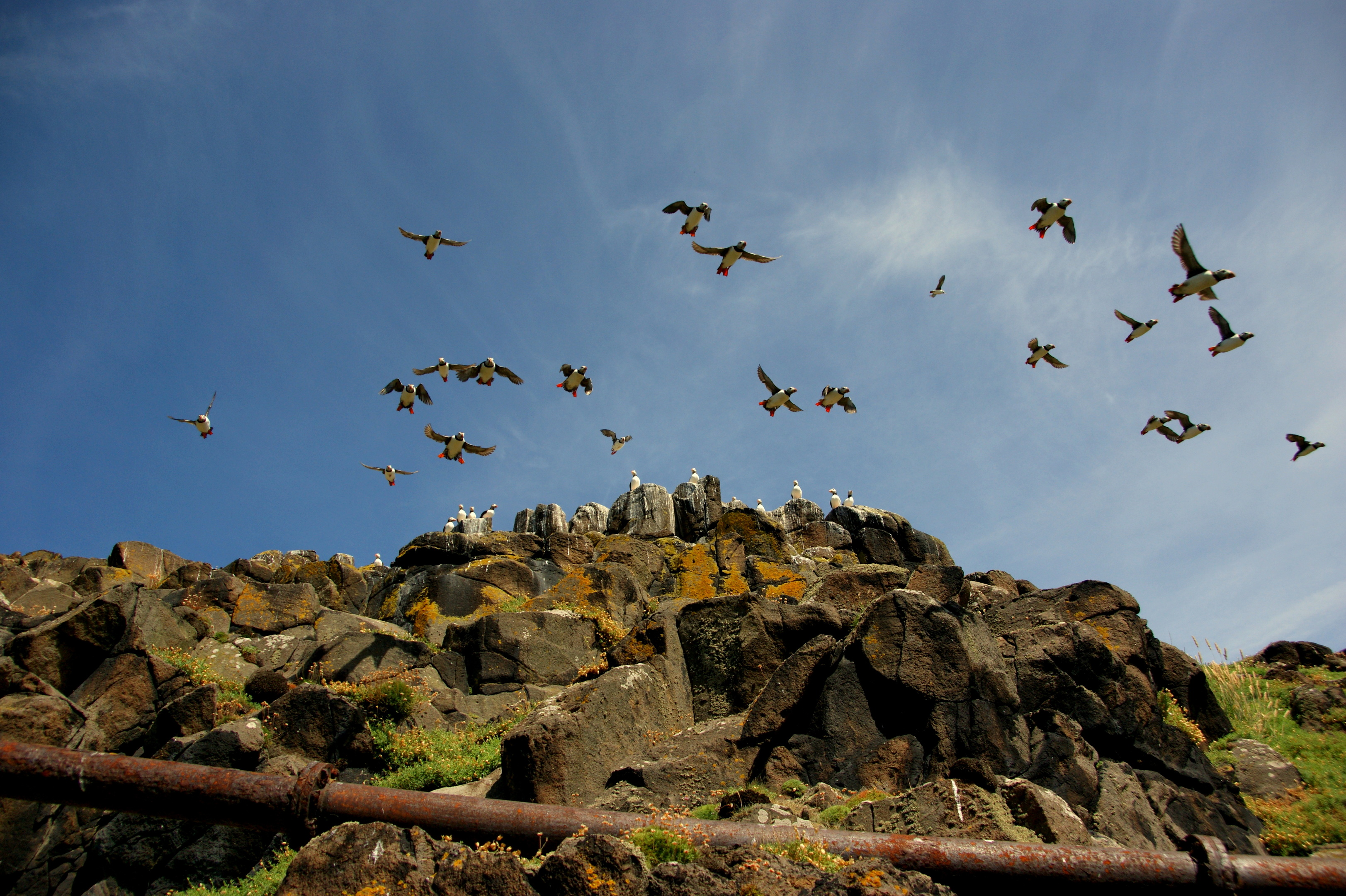 The Isle of May is home to many species of seabird