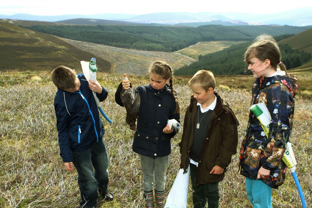 The pupils looking at one of the grouse.