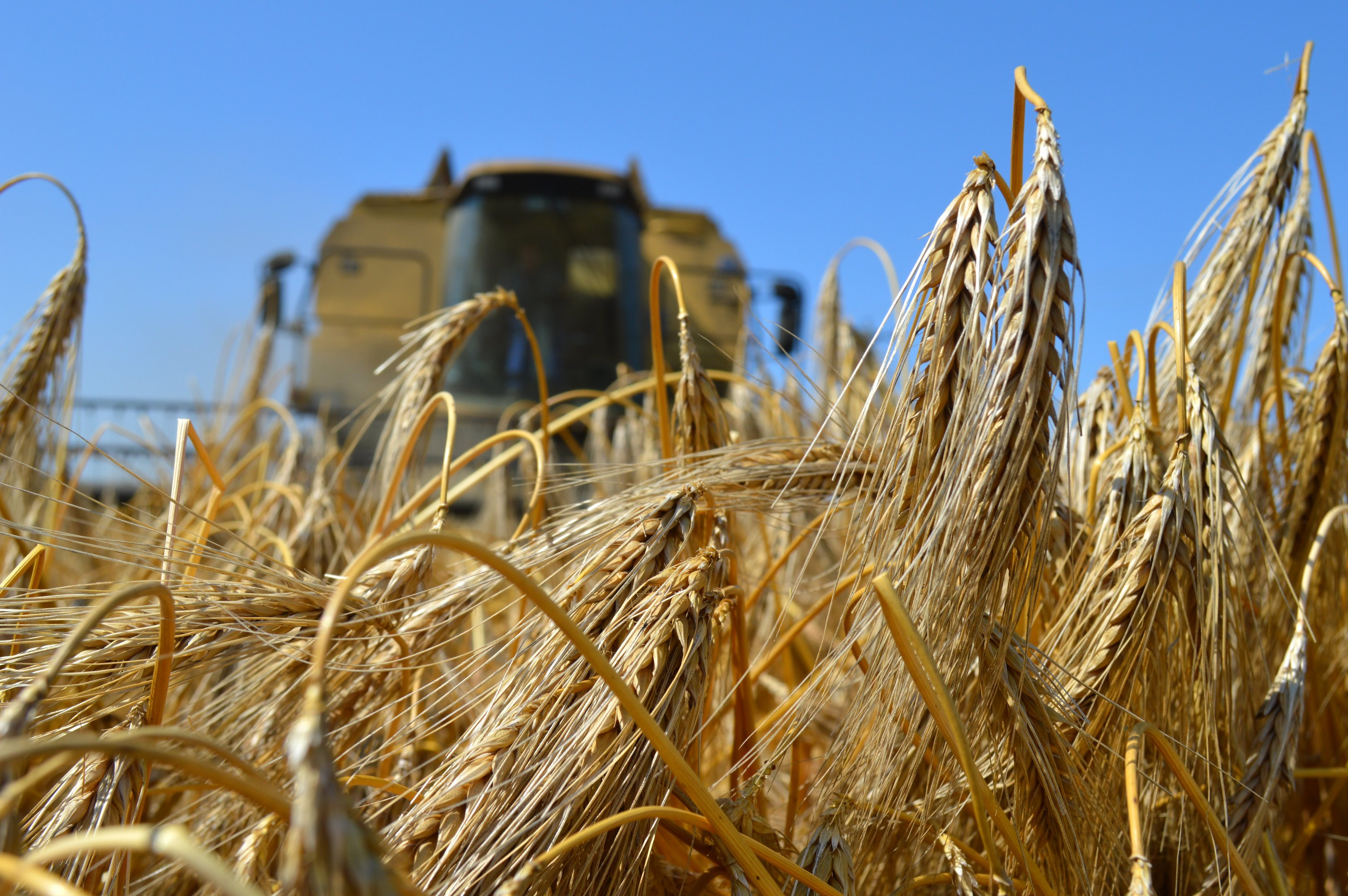 The winter barley harvest is two thirds complete