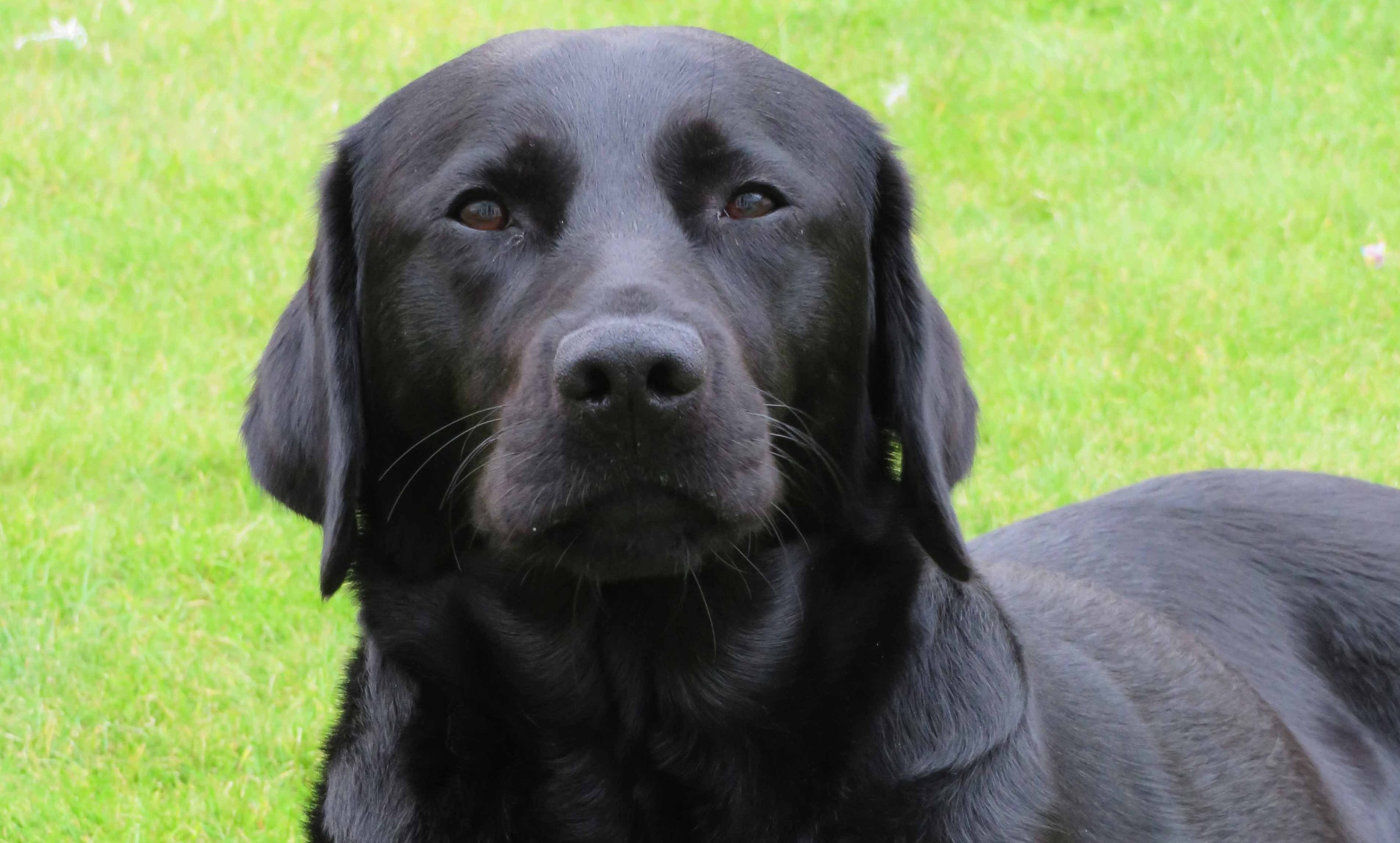 A picture of Yancy taken by her new Edinburgh family.