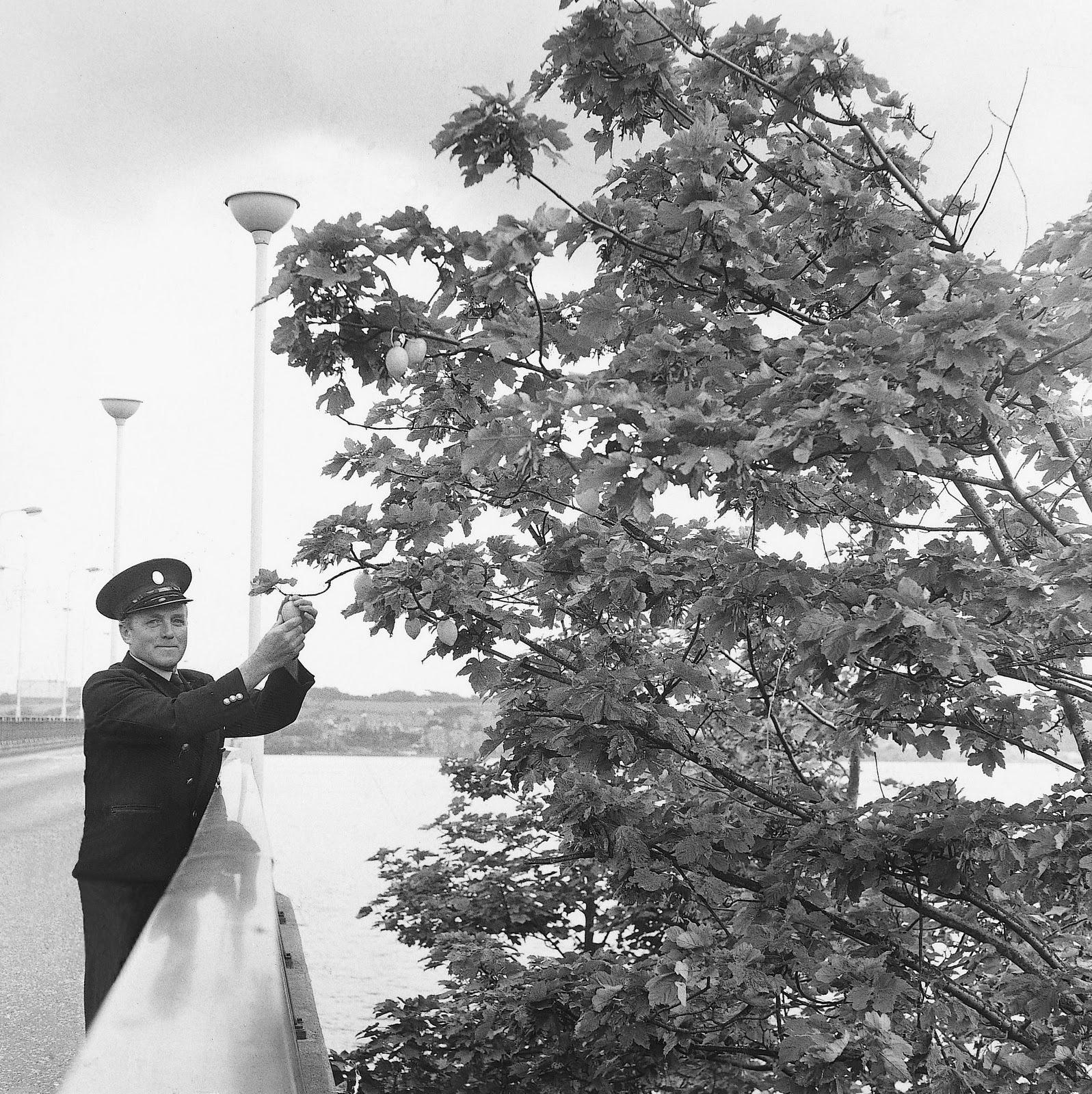 The original Jif Lemon tree.