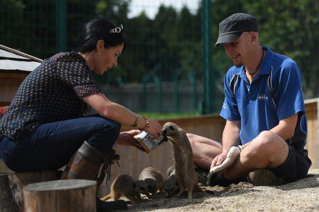 Gayle and keeper Phil McCarlie-Davis feed the meerkats.