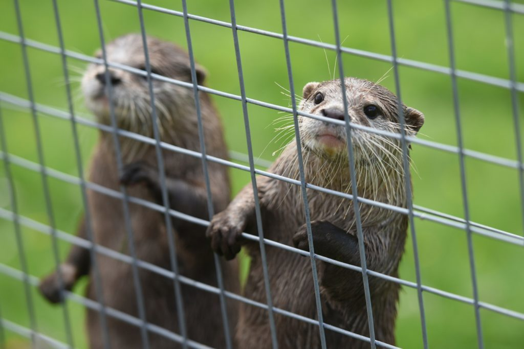 They may look cute but otters can give you a nasty bite!