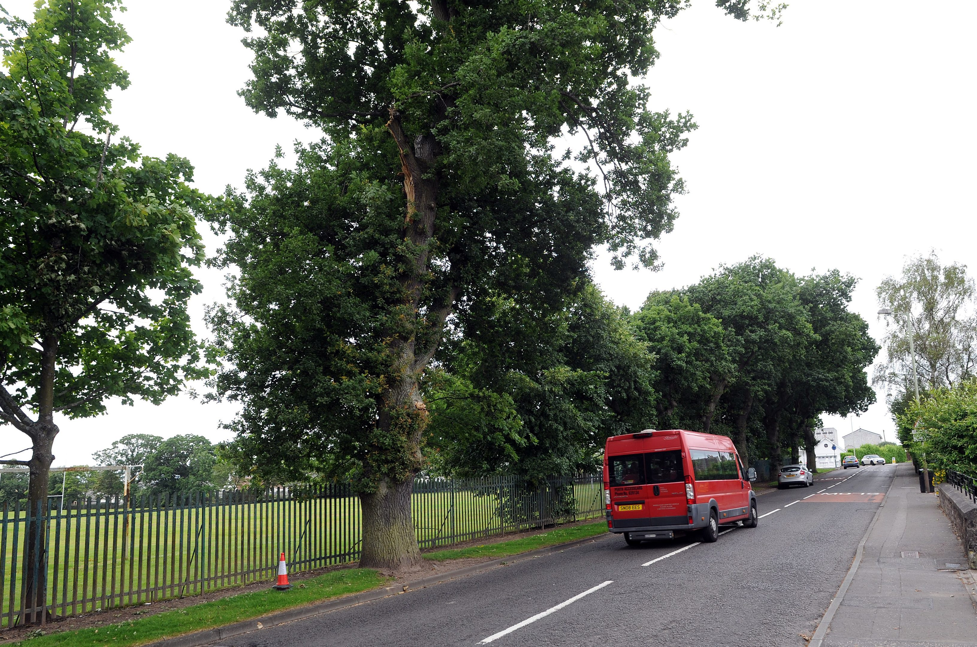 The trees on Viewlands Road, Perth, including the one which lost a branch.